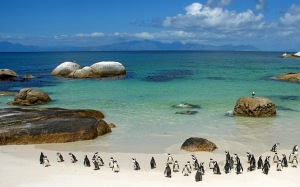 The Penguins of South Africa