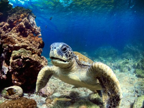 visit-the-galapagos-islands-located-off-the-coast-of-ecuador-where-youll-get-up-close-views-of-sea-turtles-and-plenty-of-other-animals-each-island-boasts-a-unique-landscape-ranging-from-volcanic-rocks-to-white-sand-beaches